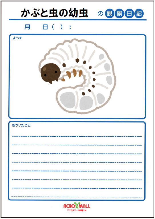 カブトムシの幼虫やサナギの観察日記